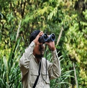 birdwatching in pailin