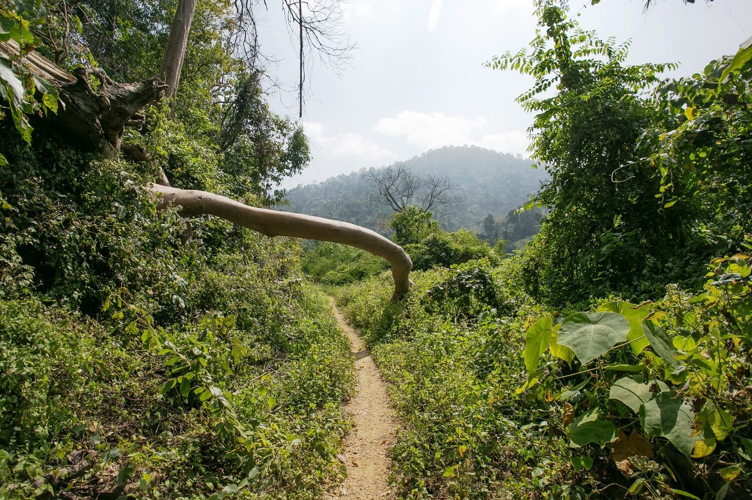 things to do in Pailin