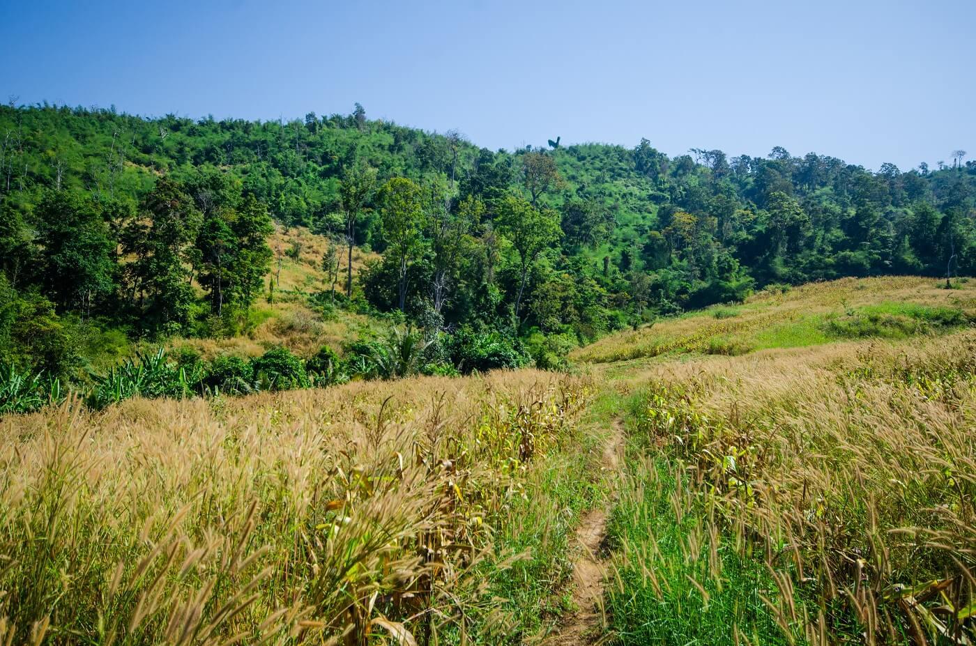 eco retreat in Cambodia